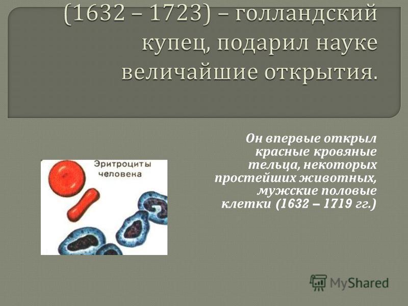 Он впервые открыл красные кровяные тельца, некоторых простейших животных, мужские половые клетки (1632 – 1719 гг.)