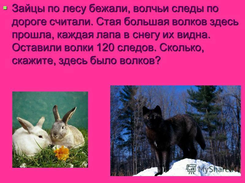 Зайцы по лесу бежали, волчьи следы по дороге считали. Стая большая волков здесь прошла, каждая лапа в снегу их видна. Оставили волки 120 следов. Сколько, скажите, здесь было волков? Зайцы по лесу бежали, волчьи следы по дороге считали. Стая большая в