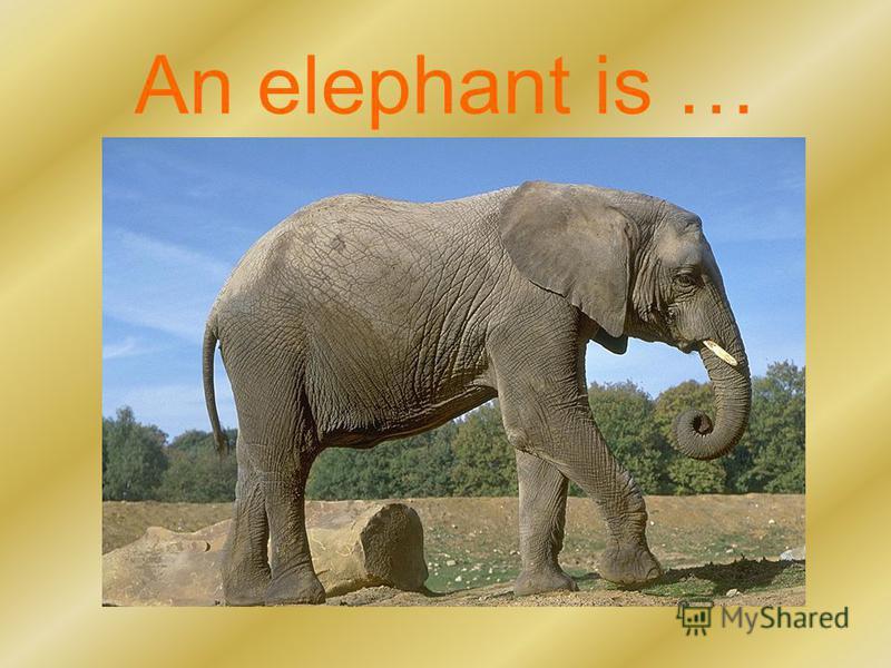 An elephant is …