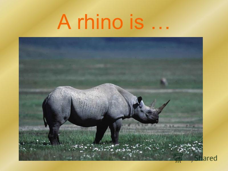 A rhino is …