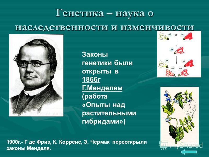 Генетика – наука о наследственности и изменчивости Законы генетики были открыты в 1866 г Г.Менделем (работа «Опыты над растительными гибридами») 1900 г.- Г де Фриз, К. Корренс, Э. Чермак переоткрыли законы Менделя.