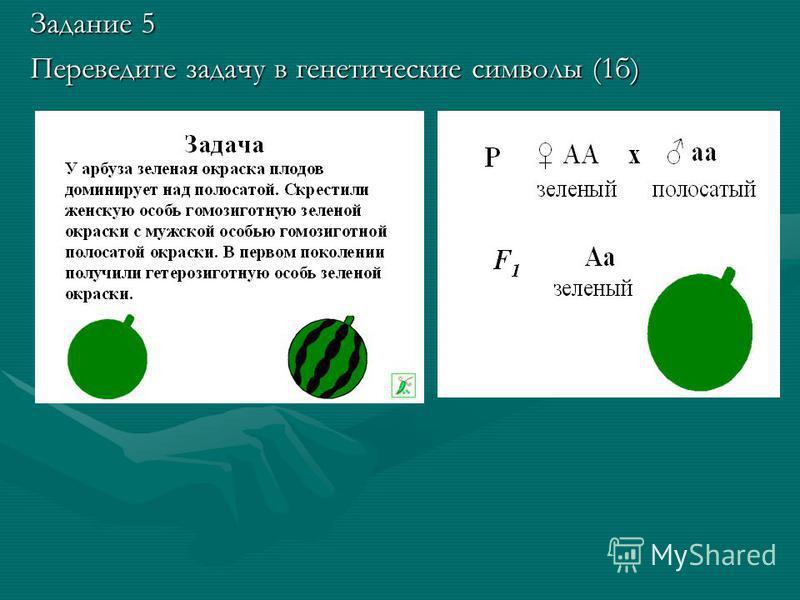 Задание 5 Переведите задачу в генетические символы (1 б)