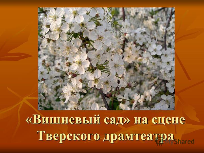 «Вишневый сад» на сцене Тверского драмтеатра