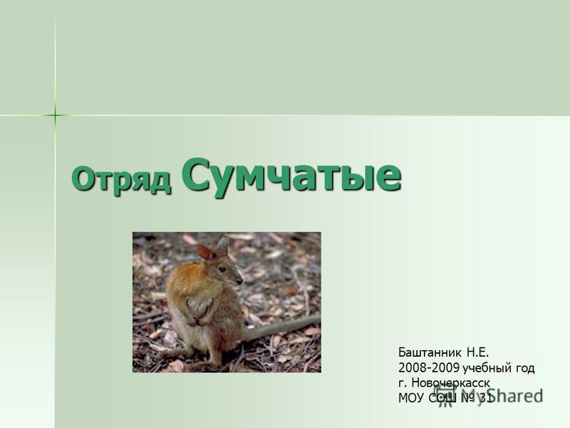 Отряд Сумчатые Баштанник Н.Е. 2008-2009 учебный год г. Новочеркасск МОУ СОШ 31