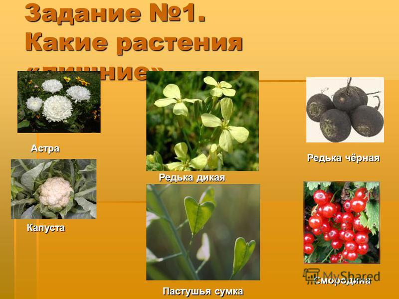 Задание 1. Какие растения «лишние» Редька чёрная Астра Капуста Смородина Редька дикая Пастушья сумка