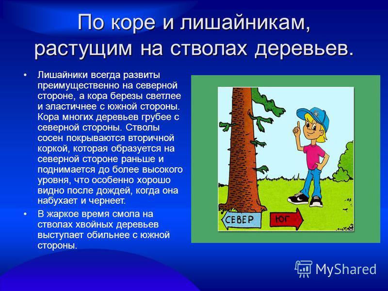 По коре и лишайникам, растущим на стволах деревьев. Лишайники всегда развиты преимущественно на северной стороне, а кора березы светлее и эластичнее с южной стороны. Кора многих деревьев грубее с северной стороны. Стволы сосен покрываются вторичной к