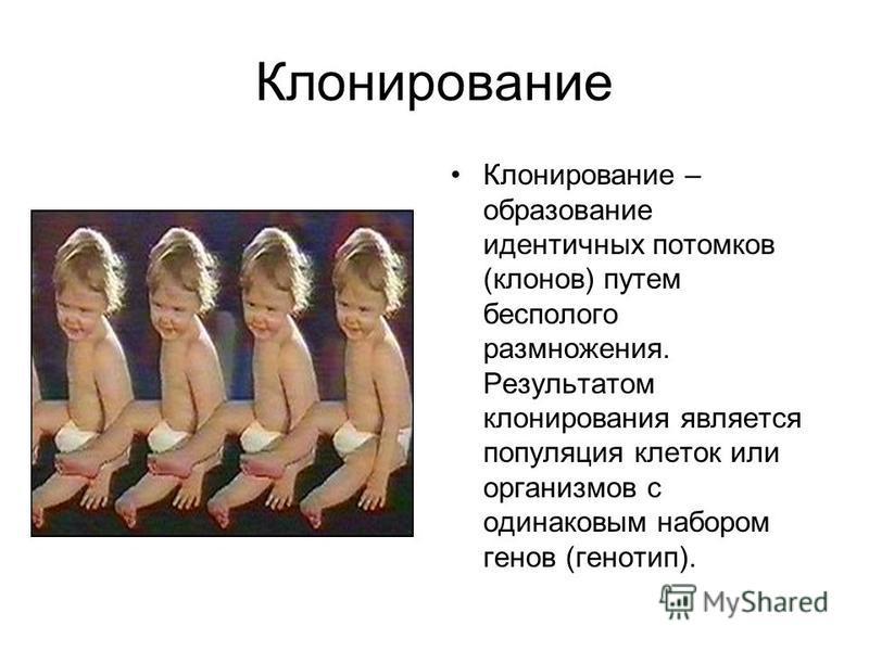 Клонирование Клонирование – образование идентичных потомков (клонов) путем бесполого размножения. Результатом клонирования является популяция клеток или организмов с одинаковым набором генов (генотип).