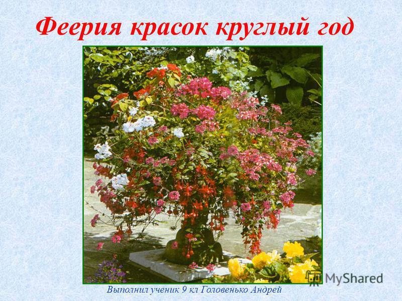 Феерия красок круглый год Выполнил ученик 9 кл Головенько Андрей
