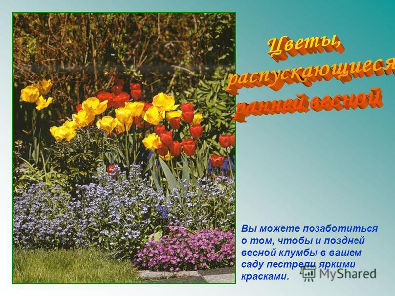 Вы можете позаботиться о том, чтобы и поздней весной клумбы в вашем саду пестрели яркими красками.