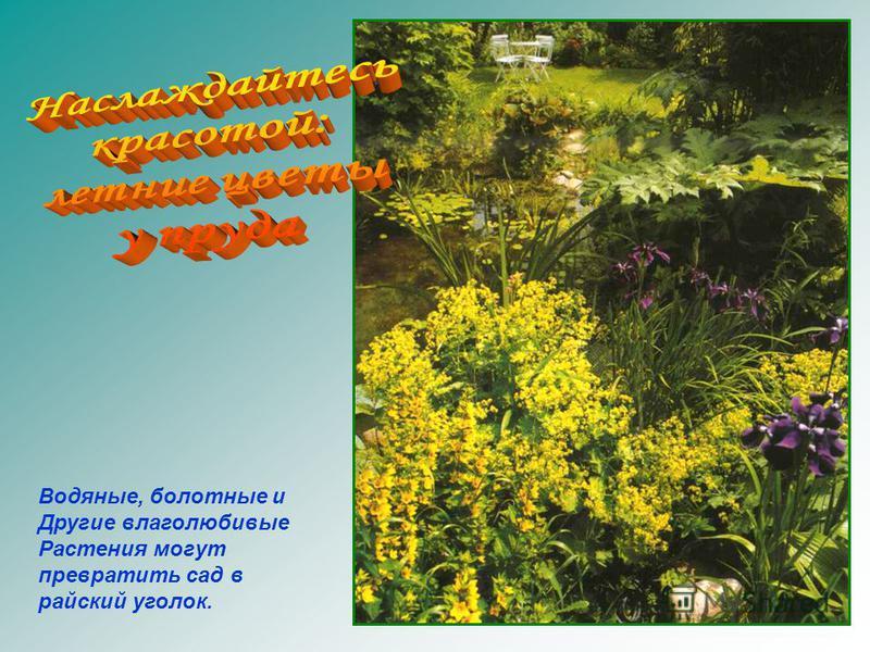 Водяные, болотные и Другие влаголюбивые Растения могут превратить сад в райский уголок.