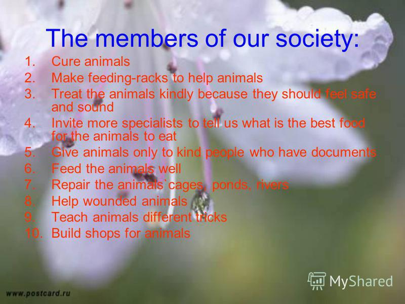 The members of our society: 1.Cure animals 2.Make feeding-racks to help animals 3.Treat the animals kindly because they should feel safe and sound 4.Invite more specialists to tell us what is the best food for the animals to eat 5.Give animals only t
