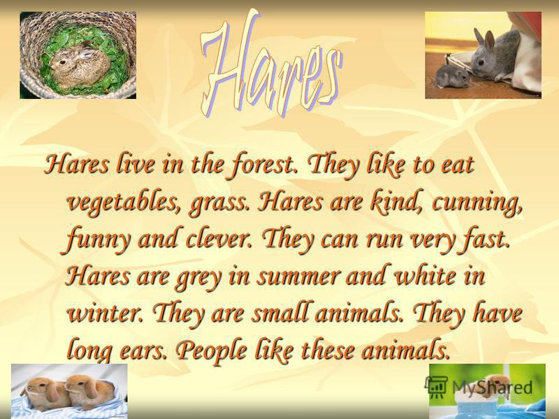 Hares live in the forest. They like to eat vegetables, grass. Hares are kind, cunning, funny and clever. They can run very fast. Hares are grey in summer and white in winter. They are small animals. They have long ears. People like these animals.