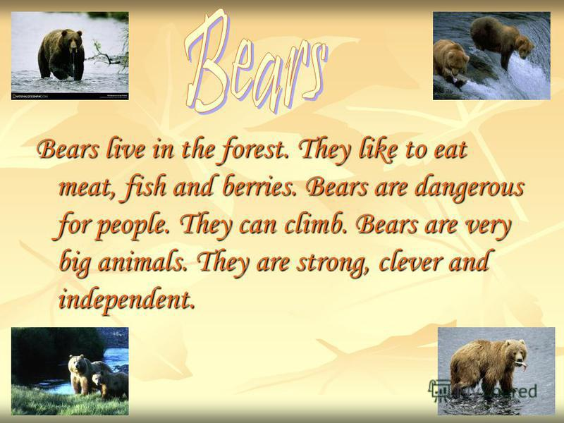 Bears live in the forest. They like to eat meat, fish and berries. Bears are dangerous for people. They can climb. Bears are very big animals. They are strong, clever and independent.