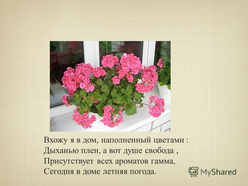 Вхожу я в дом, наполненный цветами : Дыханью плен, а вот душе свобода, Присутствует всех ароматов гамма, Сегодня в доме летняя погода.