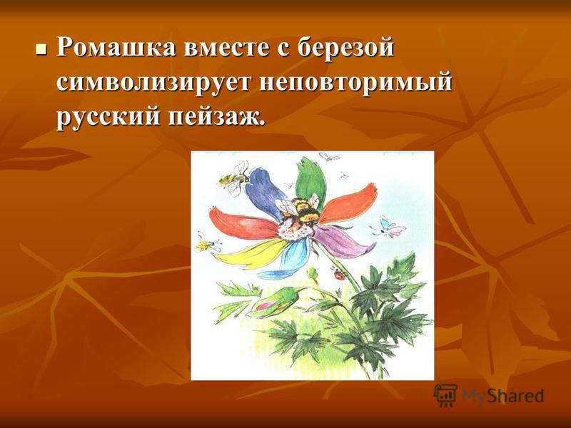 Ромашка вместе с березой символизирует неповторимый русский пейзаж. Ромашка вместе с березой символизирует неповторимый русский пейзаж.