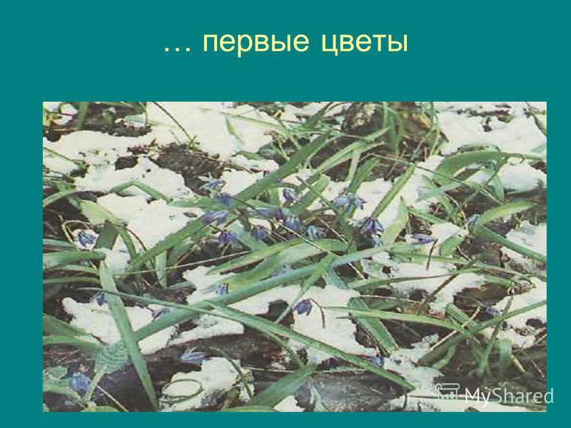 … первые цветы