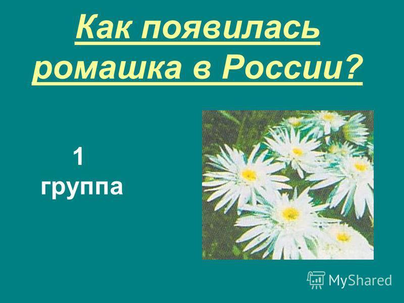 Как появилась ромашка в России? 1 группа