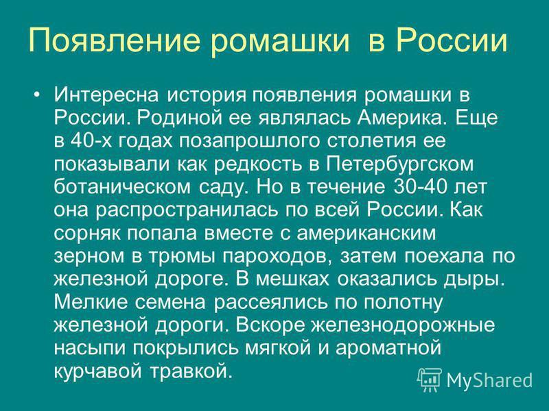 Появление ромашки в России Интересна история появления ромашки в России. Родиной ее являлась Америка. Еще в 40-х годах позапрошлого столетия ее показывали как редкость в Петербургском ботаническом саду. Но в течение 30-40 лет она распространилась по