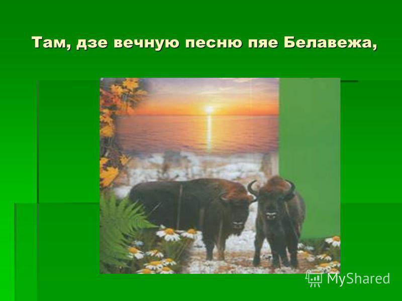 Там, дзе вечную песню пяе Белавежа,