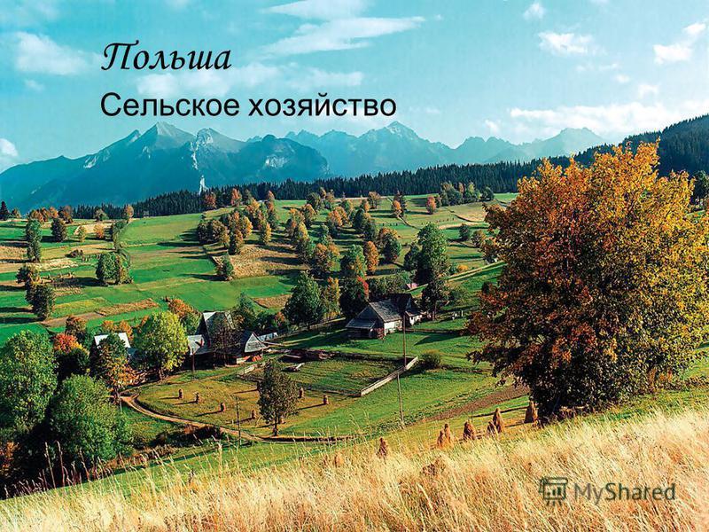 Польша Сельское хозяйство