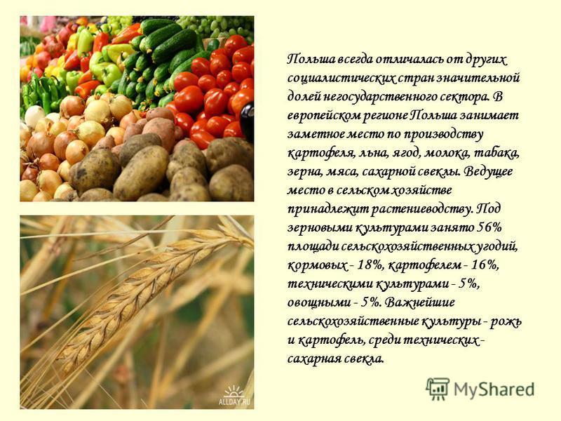Польша всегда отличалась от других социалистических стран значительной долей негосударственного сектора. В европейском регионе Польша занимает заметное место по производству картофеля, льна, ягод, молока, табака, зерна, мяса, сахарной свеклы. Ведущее