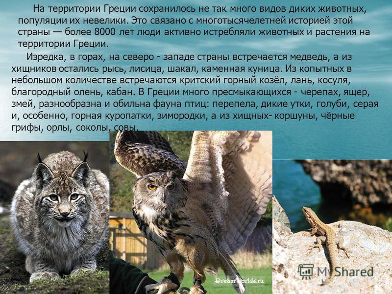 На территории Греции сохранилось не так много видов диких животных, популяции их невелики. Это связано с многотысячелетней историей этой страны более 8000 лет люди активно истребляли животных и растения на территории Греции. Изредка, в горах, на севе