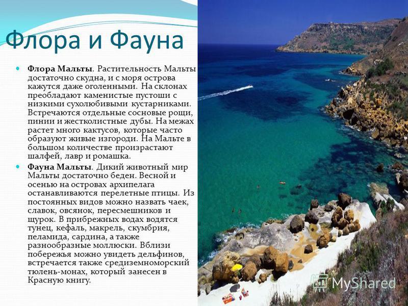 Флора Мальты. Растительность Мальты достаточно скудна, и с моря острова кажутся даже оголенными. На склонах преобладают каменистые пустоши с низкими сухолюбивыми кустарниками. Встречаются отдельные сосновые рощи, пинии и жестколистные дубы. На межах