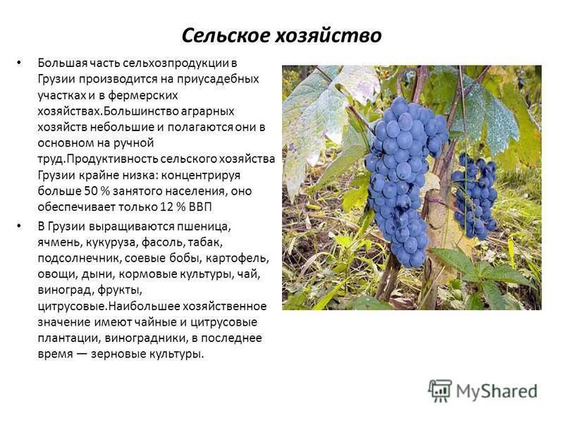 Сельское хозяйство Большая часть сельхозпродукции в Грузии производится на приусадебных участках и в фермерских хозяйствах.Большинство аграрных хозяйств небольшие и полагаются они в основном на ручной труд.Продуктивность сельского хозяйства Грузии кр