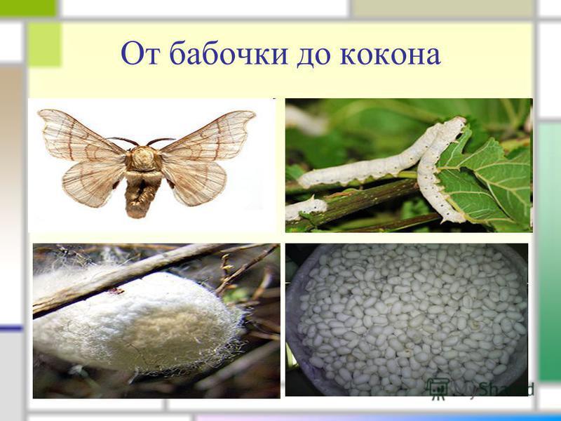 От бабочки до кокона