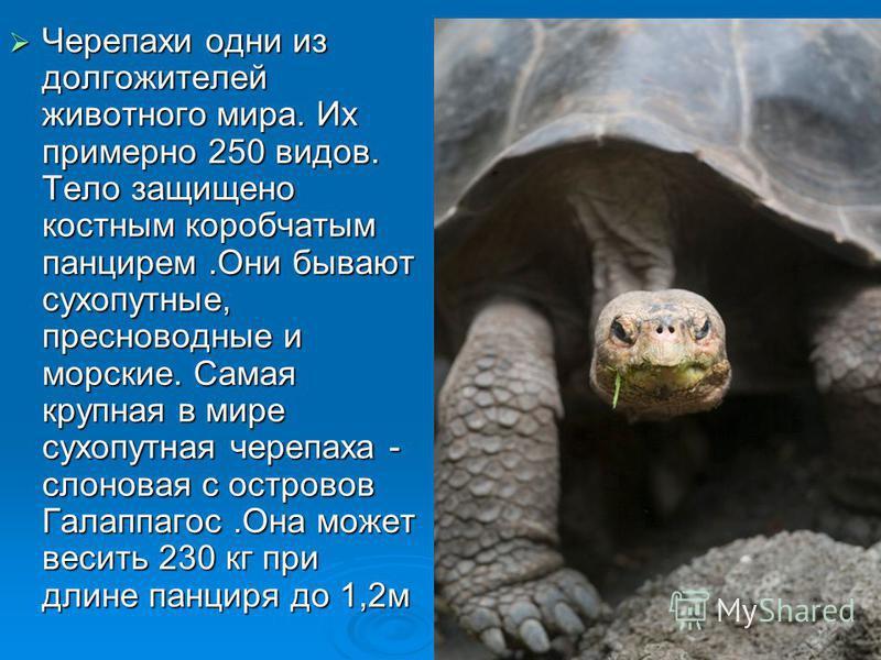 Черепахи одни из долгожителей животного мира. Их примерно 250 видов. Тело защищено костным коробчатым панцирем.Они бывают сухопутные, пресноводные и морские. Самая крупная в мире сухопутная черепаха - слоновая с островов Галаппагос.Она может весить 2