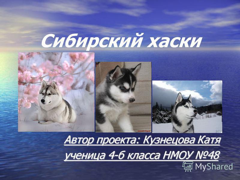 Сибирский хаски Автор проекта: Кузнецова Катя ученица 4-б класса НМОУ 48