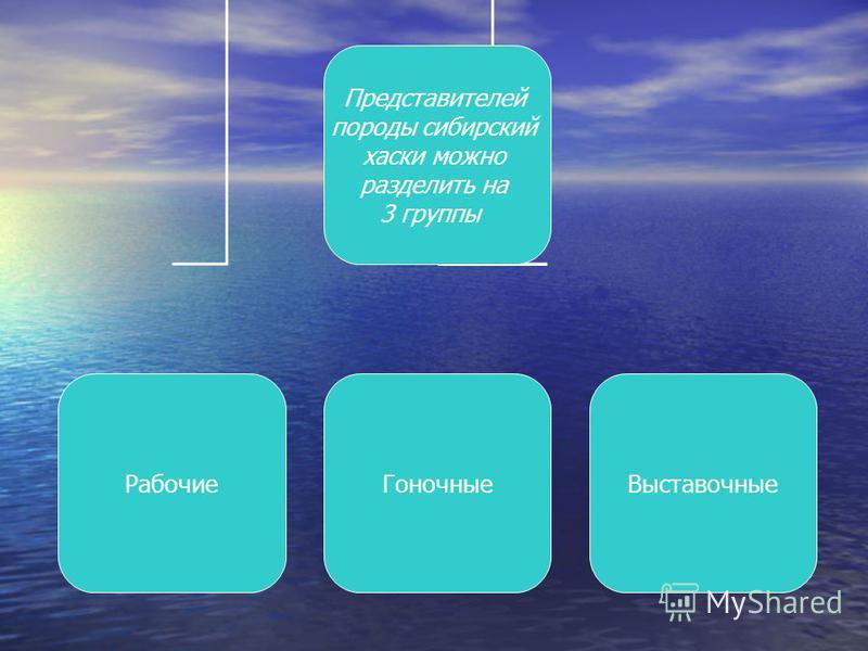 Представителей породы сибирский хаски можно разделить на 3 группы Рабочие ГоночныеВыставочные