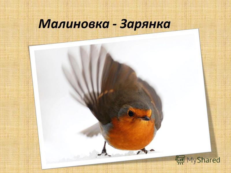 Малиновка - Зарянка