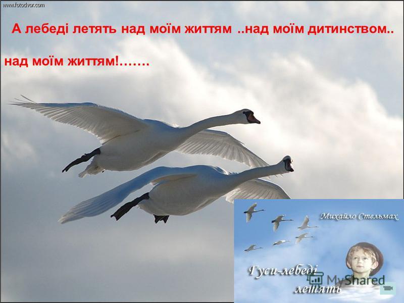 А лебеді летять над моїм життям..над моїм дитинством.. над моїм життям!…….