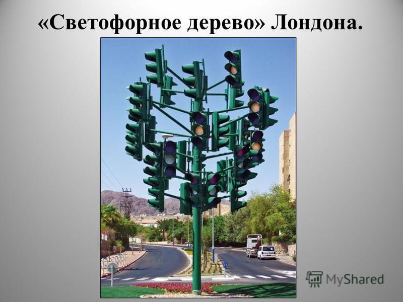 «Светофорное дерево» Лондона. 8