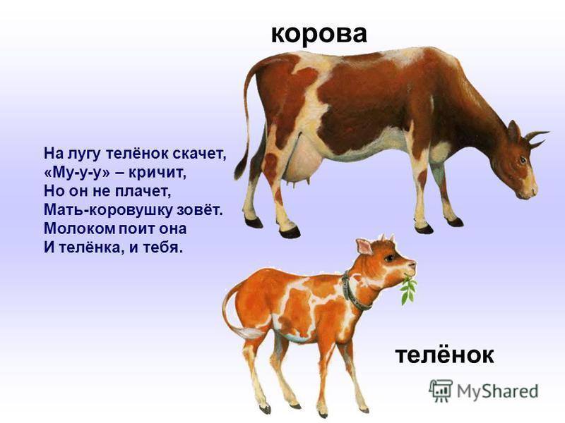 На лугу телёнок скачет, «Му-у-у» – кричит, Но он не плачет, Мать-коровушку зовёт. Молоком поит она И телёнка, и тебя. корова телёнок
