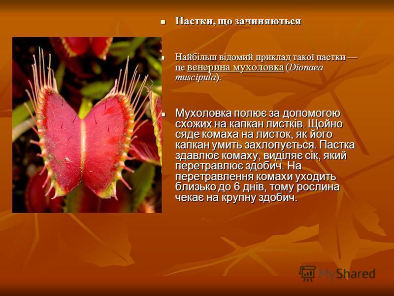 Пастки, що зачиняються Пастки, що зачиняються Найбільш відомий приклад такої пастки це венерина мухоловка (Dionaea muscipula). Найбільш відомий приклад такої пастки це венерина мухоловка (Dionaea muscipula). венерина мухоловка венерина мухоловка Мухо
