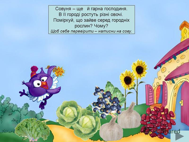 Совуня – ще й гарна господиня. В її городі ростуть різні овочі. Поміркуй, що зайве серед городніх рослин? Чому? Щоб себе перевірити – натисни на сову.