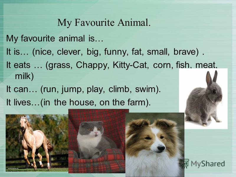 My Favourite Animal. My favourite animal is… It is… (nice, clever, big, funny, fat, small, brave). It eats … (grass, Chappy, Kitty-Cat, corn, fish, meat, milk) It can… (run, jump, play, climb, swim). It lives…(in the house, on the farm).