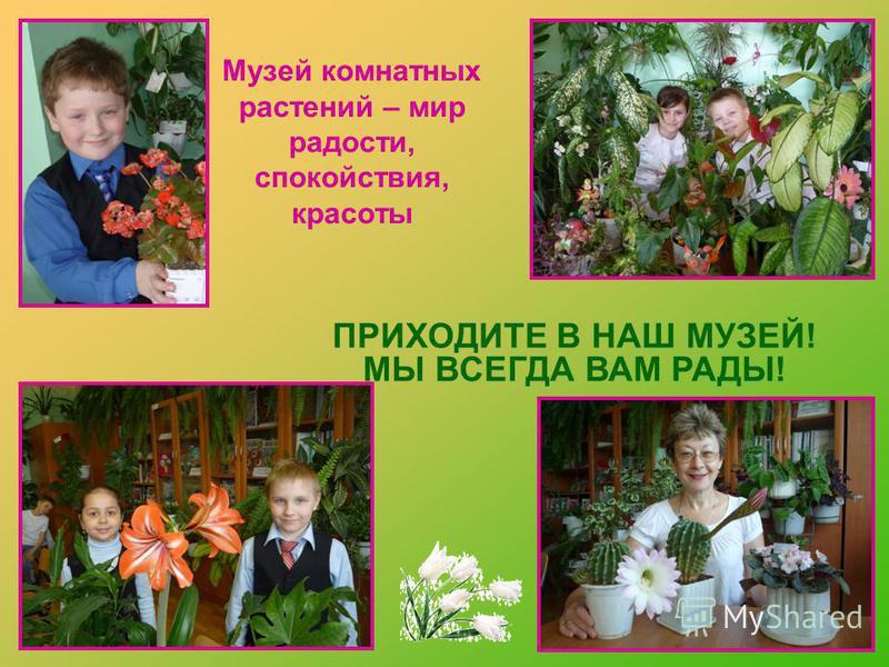 Музей комнатных растений – мир радости, спокойствия, красоты ПРИХОДИТЕ В НАШ МУЗЕЙ! МЫ ВСЕГДА ВАМ РАДЫ!