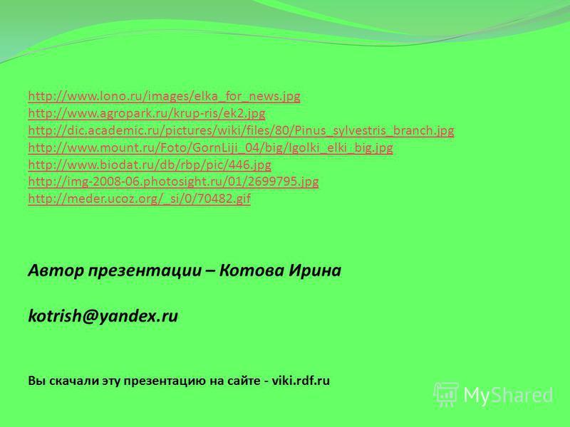 http://www.lono.ru/images/elka_for_news.jpg http://www.agropark.ru/krup-ris/ek2. jpg http://dic.academic.ru/pictures/wiki/files/80/Pinus_sylvestris_branch.jpg http://www.mount.ru/Foto/GornLiji_04/big/Igolki_elki_big.jpg http://www.biodat.ru/db/rbp/pi