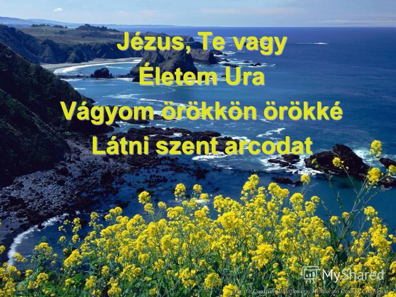 Jézus, Te vagy Életem Ura Vágyom örökkön örökké Látni szent arcodat