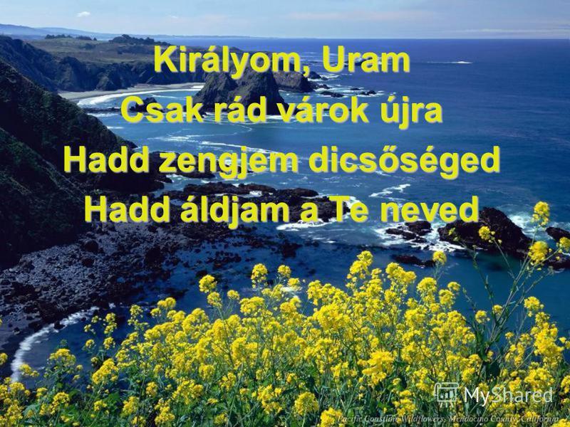 Királyom, Uram Csak rád várok újra Hadd zengjem dicsőséged Hadd áldjam a Te neved