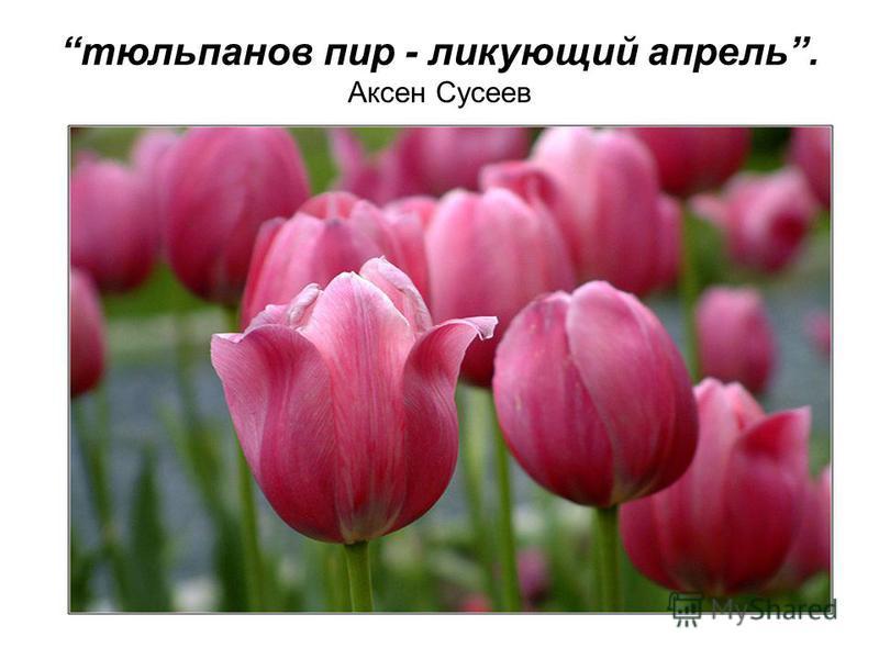 тюльпанов пир - ликующий апрель. Аксен Сусеев