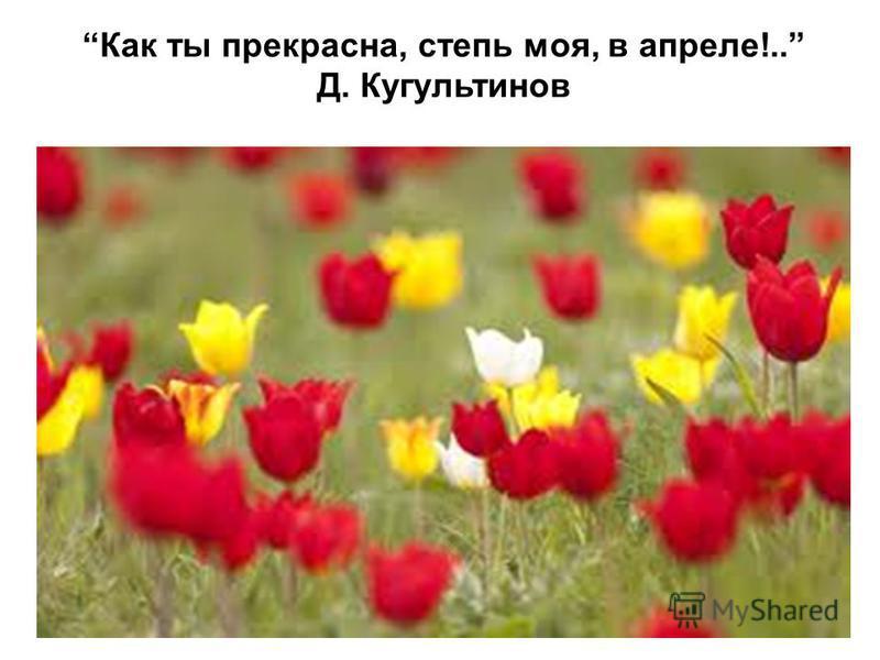Как ты прекрасна, степь моя, в апреле!.. Д. Кугультинов