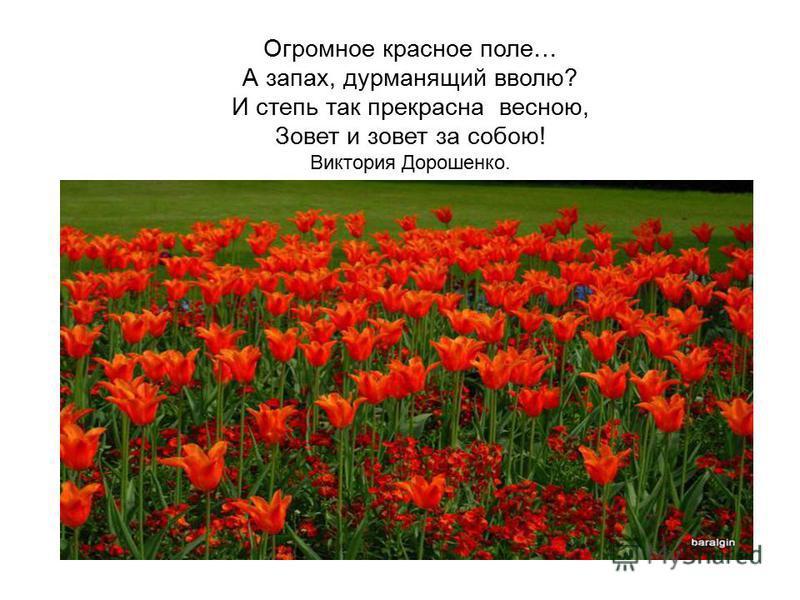 Огромное красное поле… А запах, дурманящий вволю? И степь так прекрасна весною, Зовет и зовет за собою! Виктория Дорошенко.