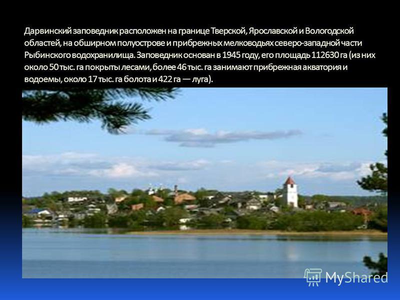 Дарвинский заповедник расположен на границе Тверской, Ярославской и Вологодской областей, на обширном полуострове и прибрежных мелководьях северо-западной части Рыбинского водохранилища. Заповедник основан в 1945 году, его площадь 112630 га (из них о