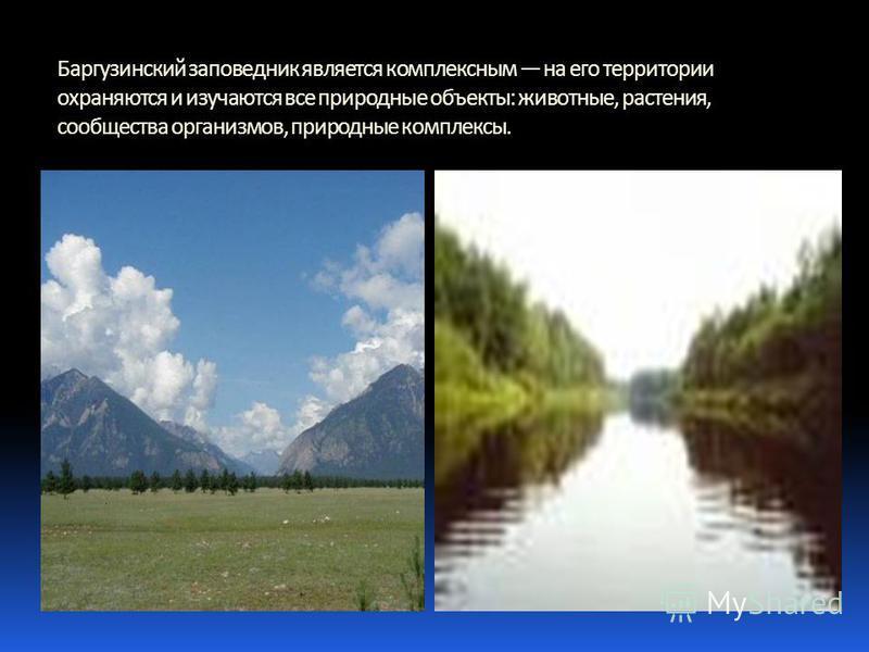 Баргузинский заповедник является комплексным на его территории охраняются и изучаются все природные объекты: животные, растения, сообщества организмов, природные комплексы.