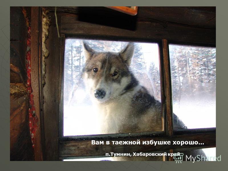 Мой край, мой городтумнин Вам в таежной избушке хорошо… п.Тумнин, Хабаровский край