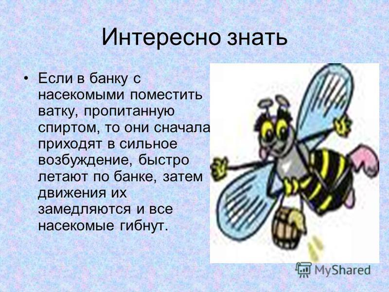 Интересно знать Алкоголь влияет на поведение животных. Они становятся сонными и вялыми. У животных появляются судороги, краснеют глаза, они начинают дрожать, с трудом дышать.